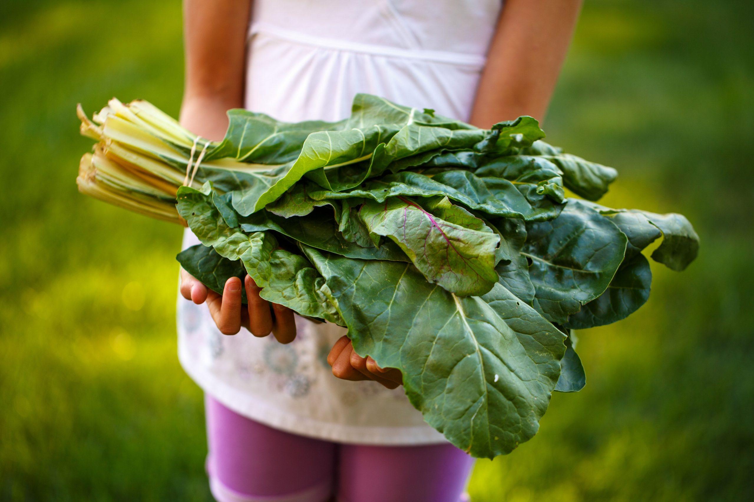 Eine junge Frau trägt vielfärbiges Gemüse, Mangold, in ihren Händen