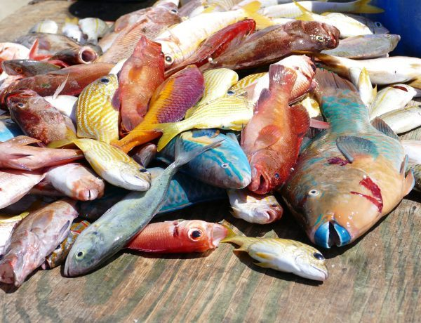 Fischerei im Bild, viele bunte Fische auf einem Holz-Untergrund.