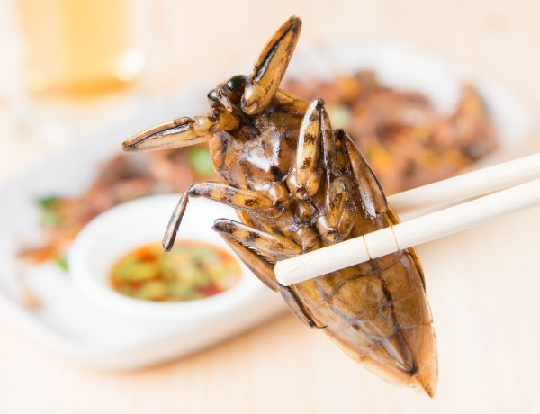 Insekten Essen: Jemand hält ein Insekt mit zwei Stäbchen.