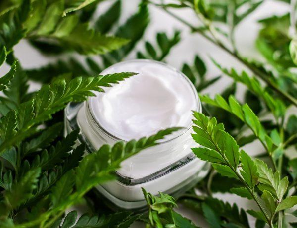 Ein Tiegel Biokosmetik umgeben von grünen Blättern